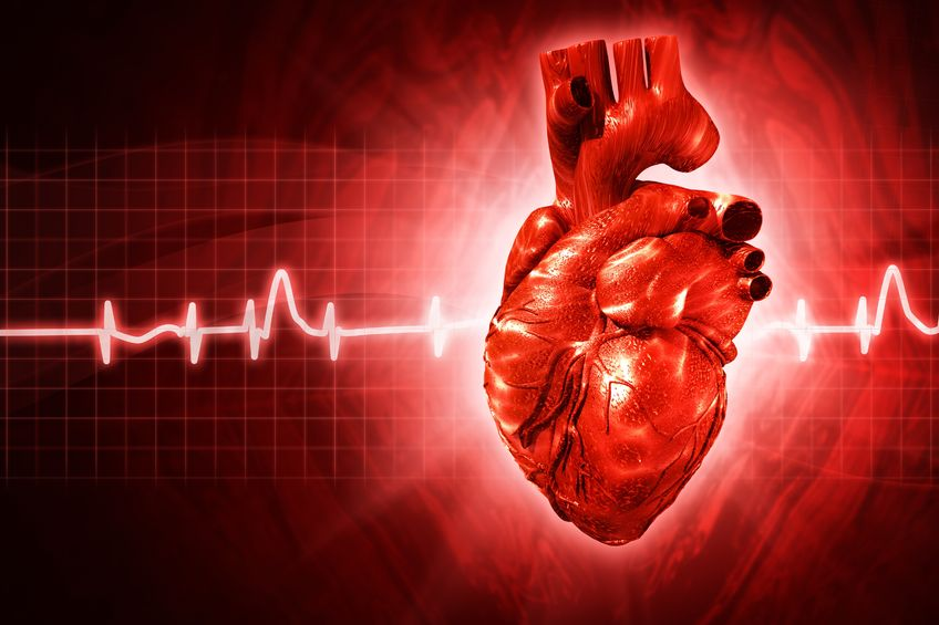 8 Interesting facts about your heart – Texila Connect